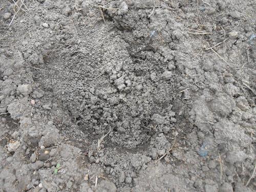 Bề mặt đất bị nhiễm phèn tại nông trường Phạm Hai