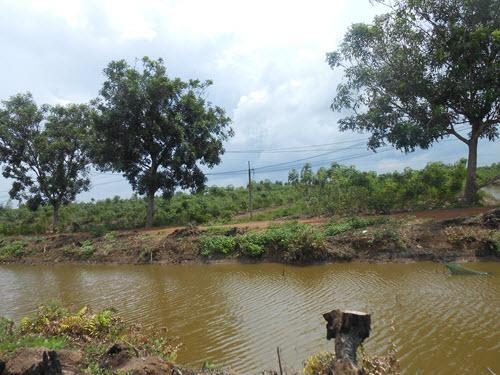 Nước cũng bị nhiễm phèn gây khó khăn cho trồng trọt và chăn nuôi