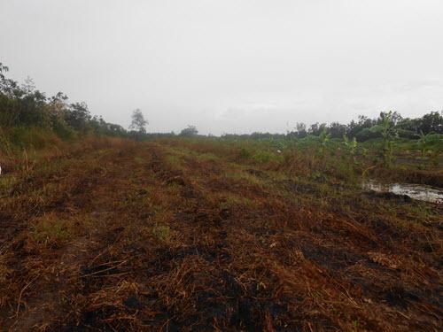 Đất ở nông trường đang bị nhiễm phèn