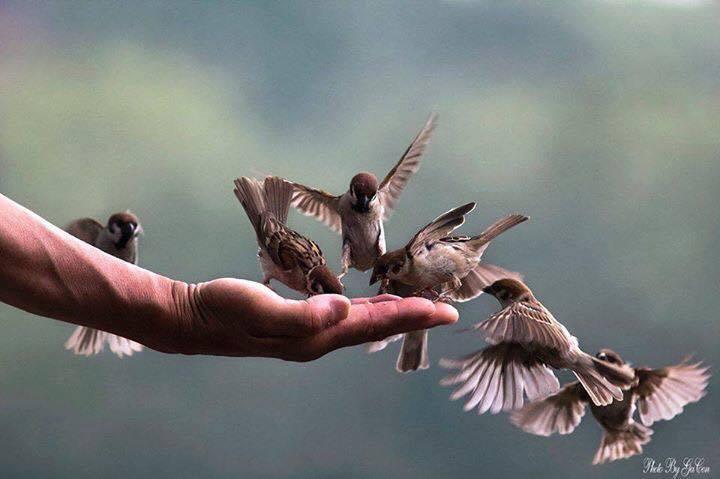 phong sinh chim