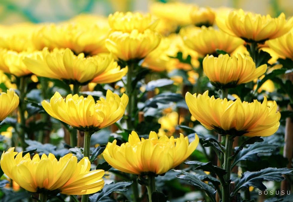 hoa cung phat